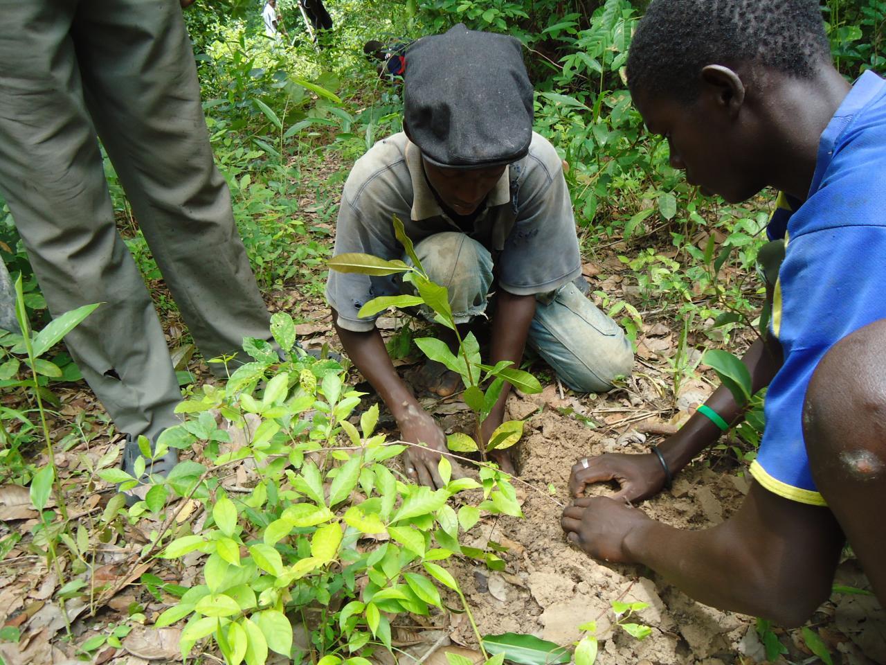 Lutte contre la déperdition scolaire à Kédougou: l'association Food For Children initie des jardins potages et reboise les écoles