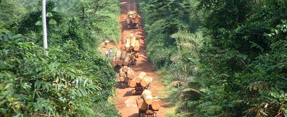 Exploitation clandestine de bois:Près de mille planches saisies, le cerveau du trafic arrêté